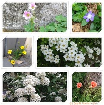 weed flower 1.jpg